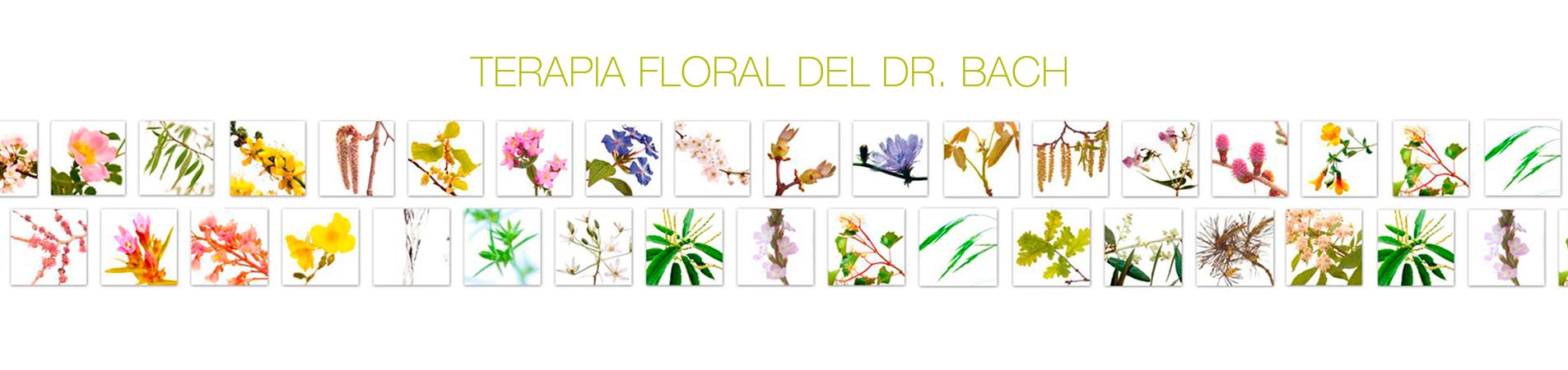 mosaic_38-flors_6