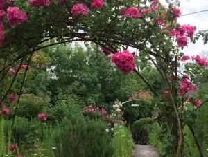 glorieta-Wild-Rose