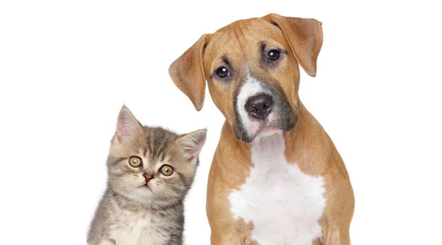 Perros, gatos, verbenas y Flores de Bach