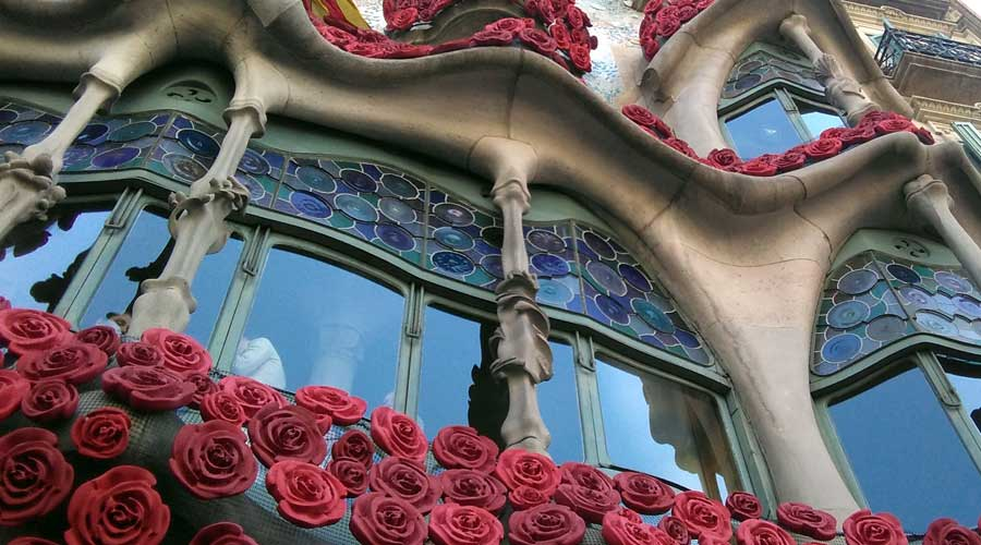 Wild Rose una rosa muy especial